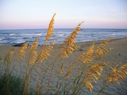 Beach grass overlooking the ocean waves